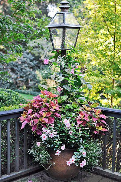 Annual pink 'Alice du Pont' mandevilla scrambles up a deck lamp post; 'Morning Mist' coleus adds volume, and pink dipladenia and 'Snow Princess' alyssum cascade over the pot edges.