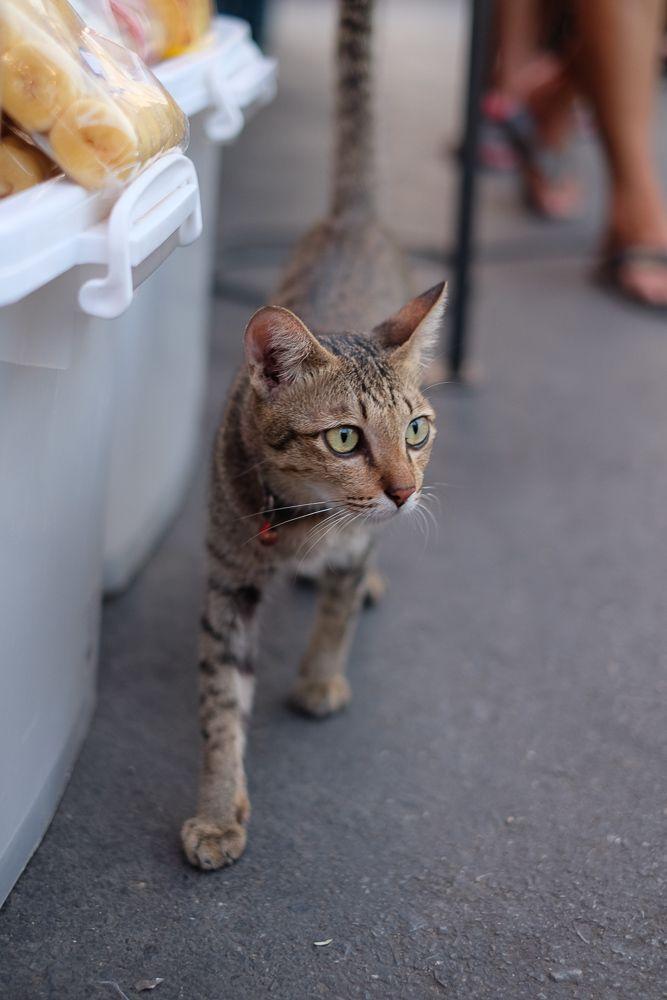 B-Kyu: Thailand Street Food Tour ~ Ayutthaya