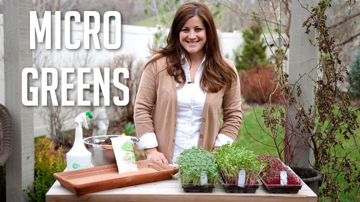 Microgreens are Easy to Grow Video Guide