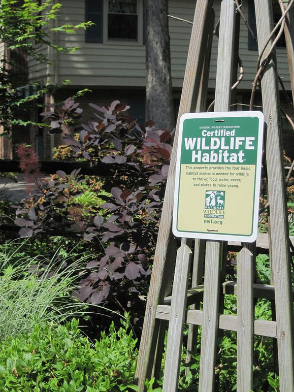 Tips And Ideas For Growing A Wildlife Garden | I Just Certified My Back Yard  As
