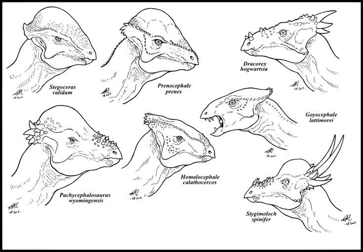 Stegoceras, Prenocephale, Dracorex, Pachycephalosaurus ...