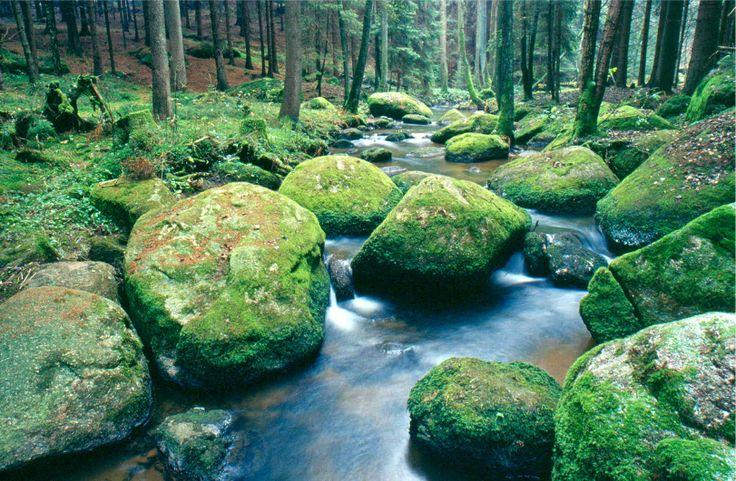Naturpark Nördlicher Oberpfälzer Wald - Der Doost