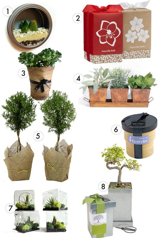 33 best images about fifty shades of green golf tournament for Indoor plant gift ideas