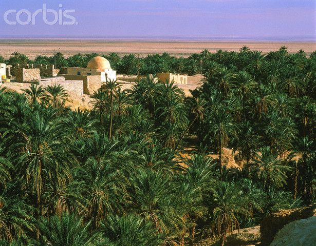 A look at the oasis Chebika, Tunisia