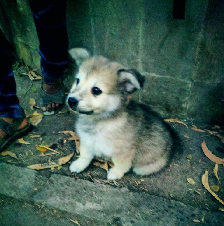 Cute animals❤ #cute