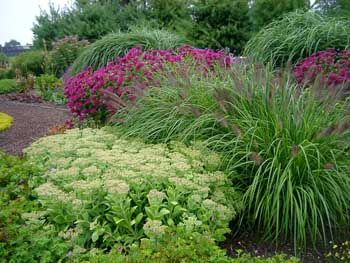 Grasses sedum and monarda brighten up this fall landscape for Ornamental grasses that stay green all year
