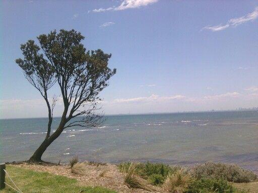 Lonely tree brighton beach