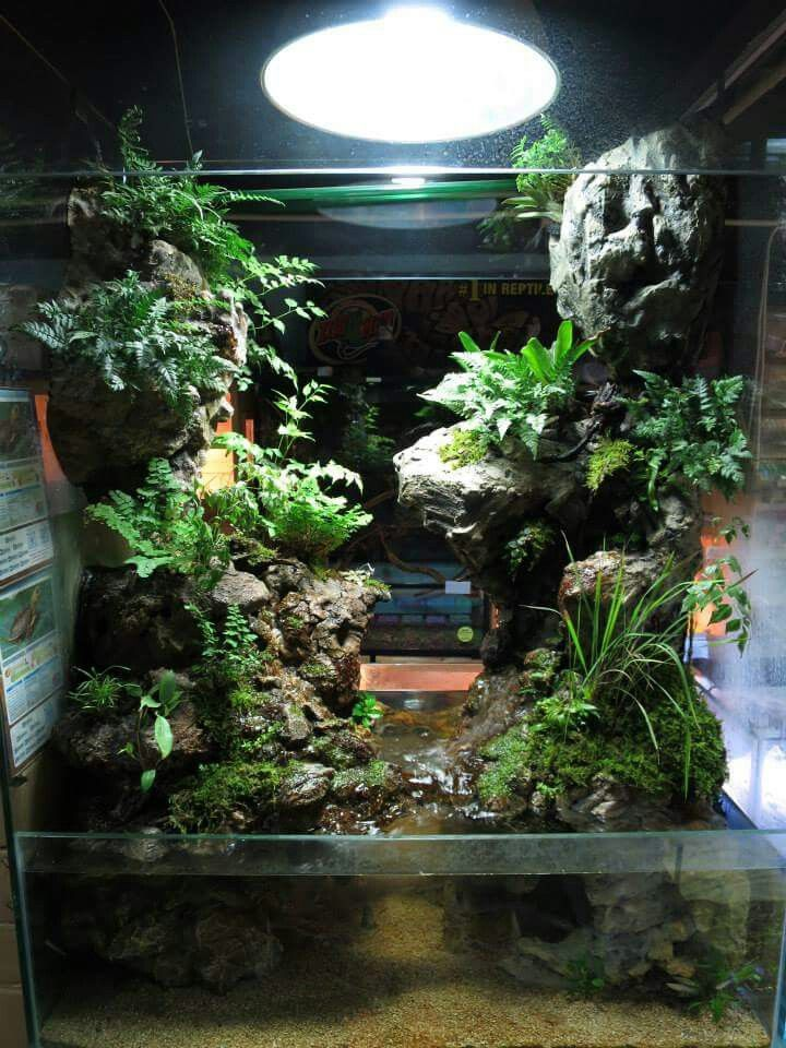 Mejores 54 im genes de vivariums en pinterest terrario for Terrario vertical