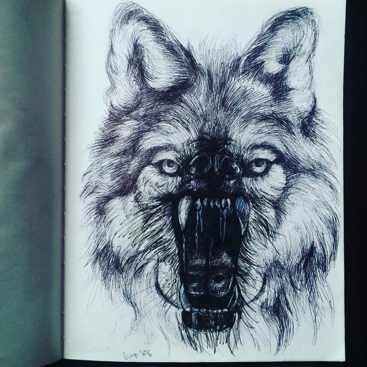 Last one, the wolf, drawing eith microns as project for etching, by Magdalena Leszczyniak