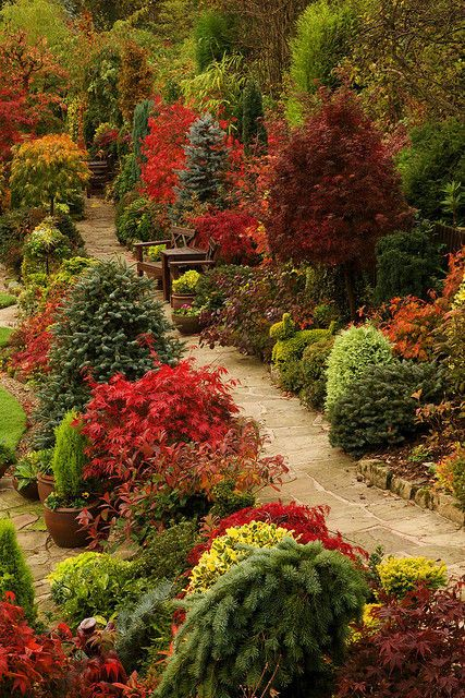 Path through the autumn upper garden (October 29) /… enchantedengland: Happiness=Discovering the picture is in England LOOK AT THIS GARDEN there is nothing like an English garden! This is in Walsall, in the West Midlands; and it is the prettiest garden ever. My garden will look like this by next autumn I am quite certain of this. #I am a positive thinker #It could happen