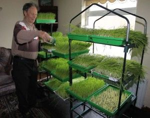 Danny McDonald healed from stage 4 stomach cancer by drinking 7 ounces of wheatgrass juice daily.