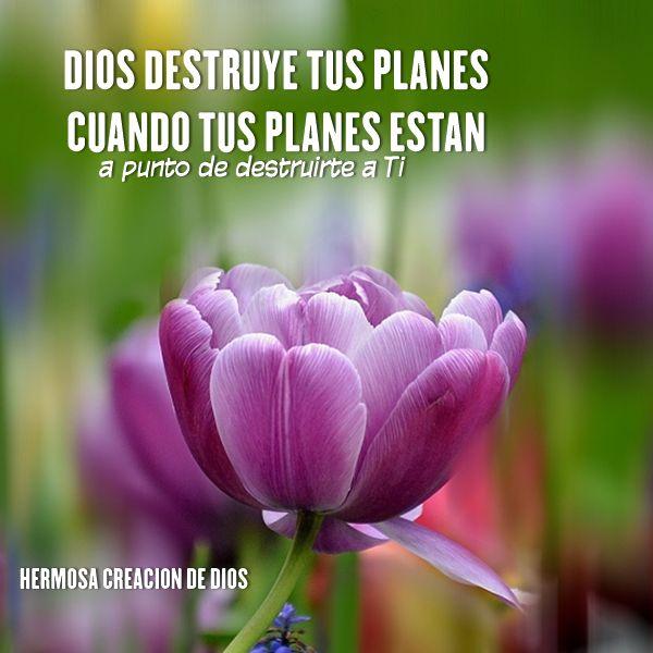 Creacion De Dios, Mensajes, Flor, Hermosa, Pino
