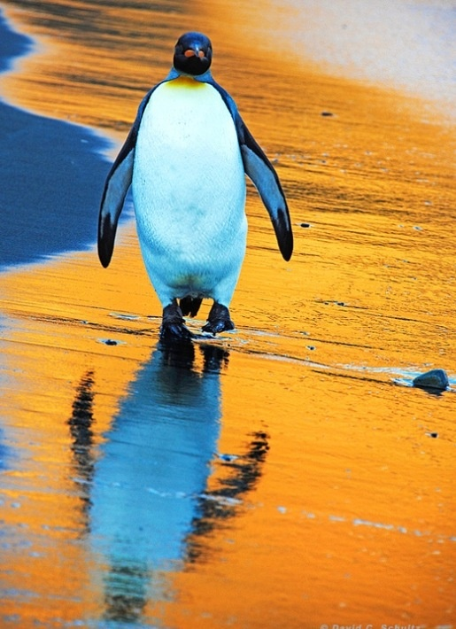 Love penguins!!!!