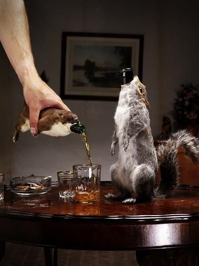 Taxidermy hilarity.: History, Squirrels, Taxidermy, Expensive Beer, Strongest Beer, Bottle, Most Expensive, Animal