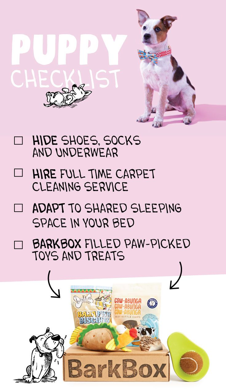 best sheesh but i canut images on pinterest fluffy pets