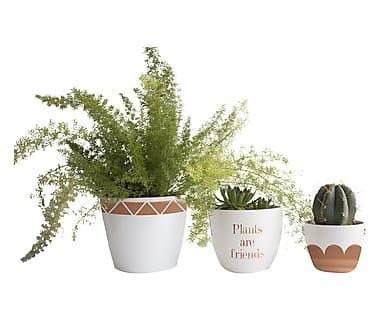 Set di 3 vasi Plants multicolor, 22x22x20 cm