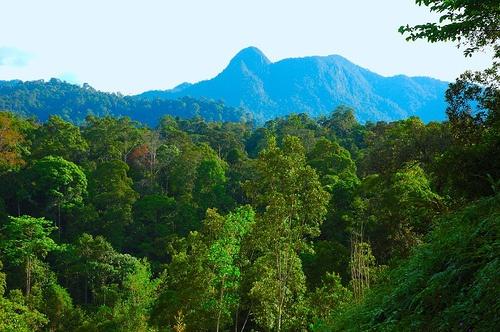 East Kalimantan Rainforest