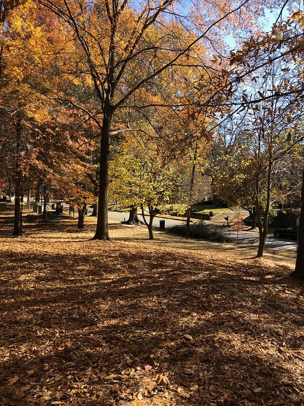 Sydney Marcus Park in Atlanta, near EMORY UC hospital