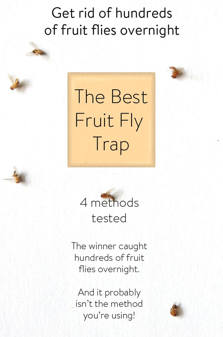 Want to get rid of fruit flies??  Yeah. Me too.   I tested 4 popular homemade fruit fly traps.  The winner caught so many more fruit flies than the others it was astonishing!