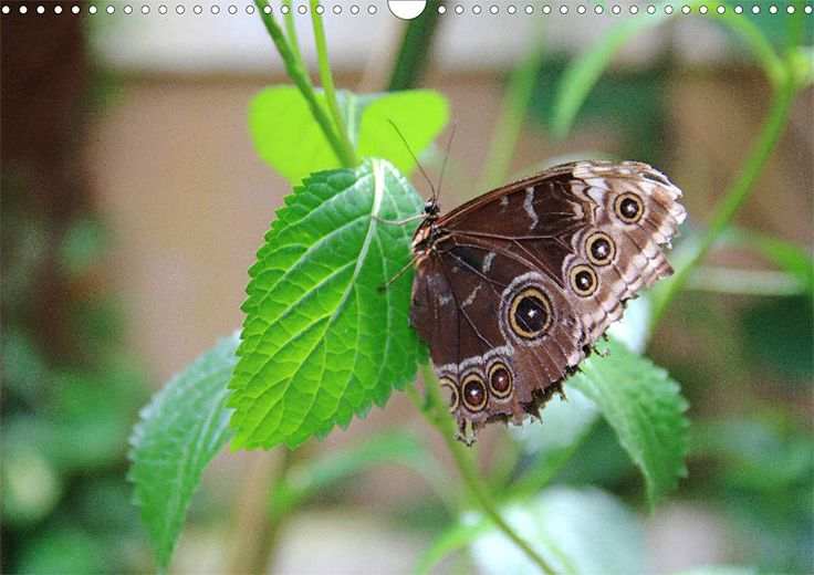 """Tier-Posterbuch """"Schmetterlinge der Tropen"""", Seite 5"""