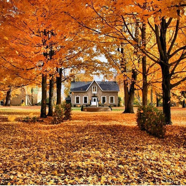 I thought I'd share this before all the leaves are gone and this is a distant memory  Can we say 'Maple Tree' #love #beautiful  This  is actually a BnB in Perth, Ontario