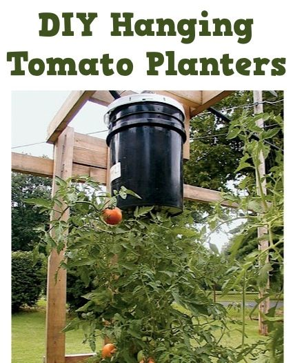 DIY Hanging Tomato Planters!  {simple gardening trick to grow fabulous tomatoes!} #tomatoes #gardening. Great idea.