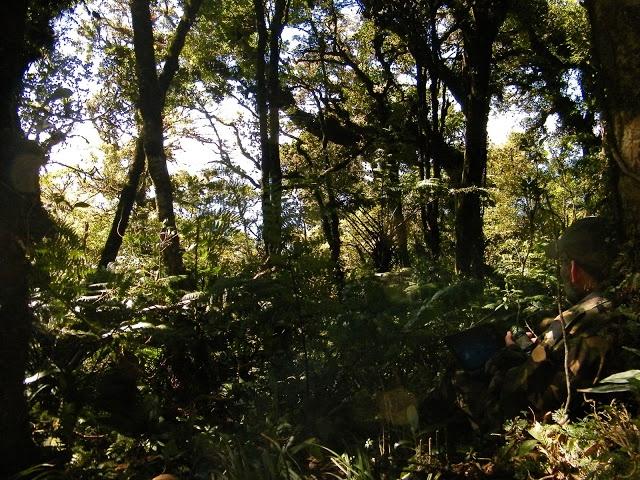 Ecología y conservación del tapir en la reserva de la biosfera El Triunfo, Chiapas, México.: FLORA