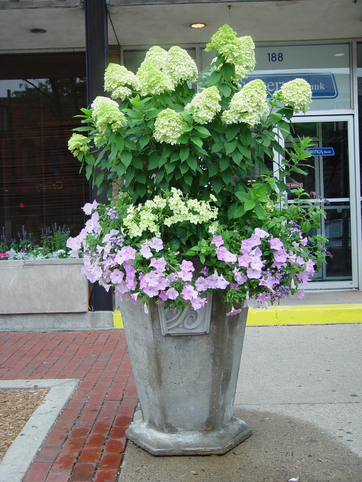 hydrangea container planting - Outdoor Flower Pots