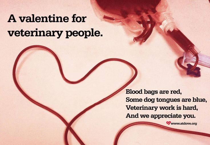 A Valentine For Veterinary People Valentinesday Vetmedlife