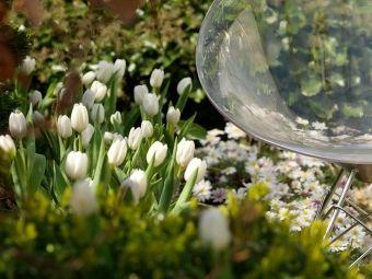 Kwiaty cebulowe w stylowych aranżacjach - 3 pomysły na wiosenne ogrody