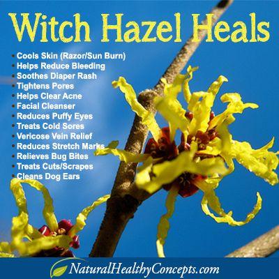 Have you tried Witch Hazel? #WitchHazel benefits