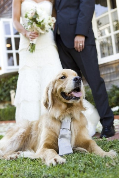 Wedding Photography With Your Pet! Golden Retriever with Bride and Groom
