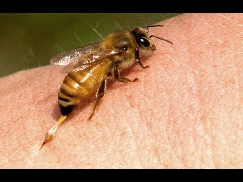 16 best images about HOW TO for beekeepers. Beekeeping 101 ...