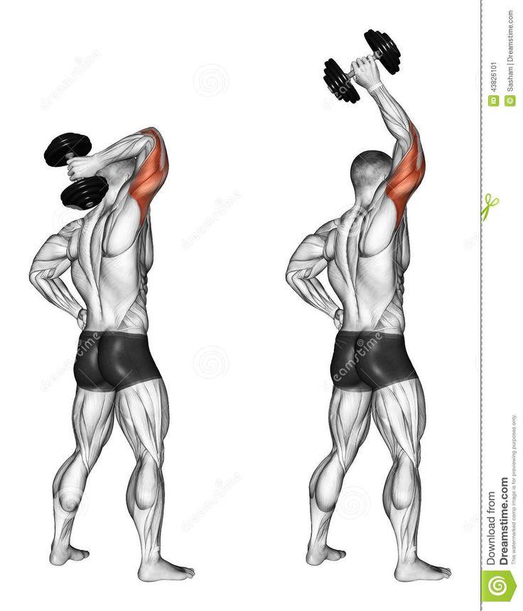 thumbs.dreamstime.com z exercising-extensi%C3%B3n-de-una-mano-con-una-pesa-de-gimnasia-de-detr%C3%A1s-la-cabeza-43826101.jpg