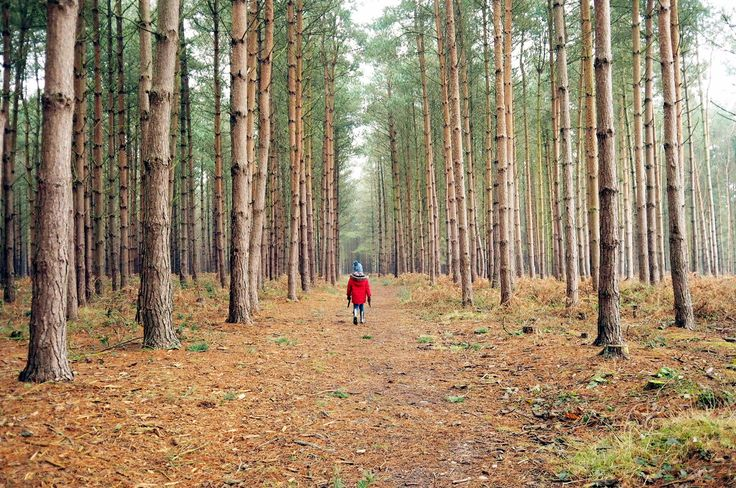 Cannock chase, Staffordshire, days out with a 5 year old