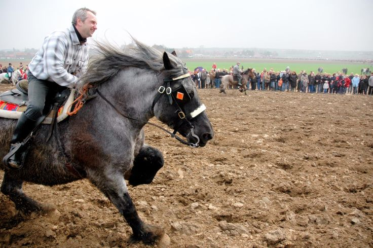 Riding Roan Belgian Draft Horses, Look How Much Fun They Are!!! <3