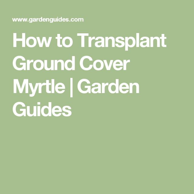 How to Transplant Ground Cover Myrtle |  Garden Guides