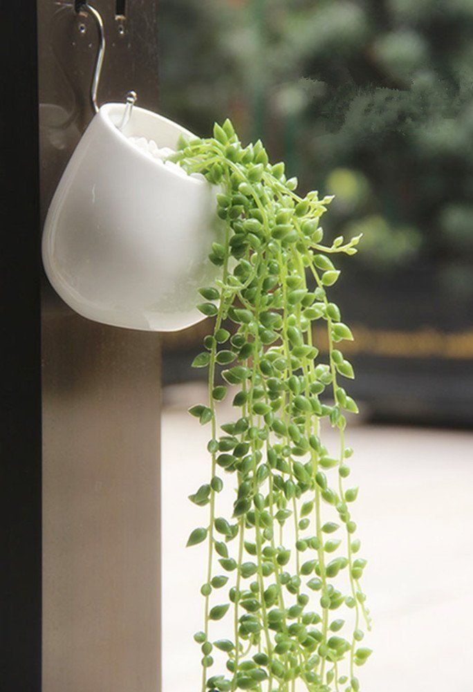 Modern Planters Hang Your Plants From The Ceiling Walls