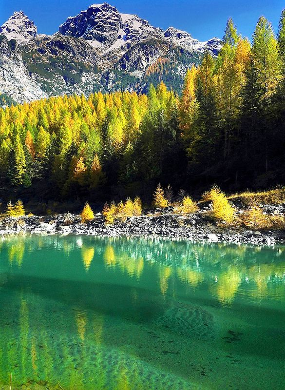 autumn reflected in a green alpine pond, Val Malenco, San Guiseppe, Lombardy, Italy