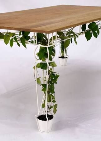 Vine in a table. Absolutely love this.