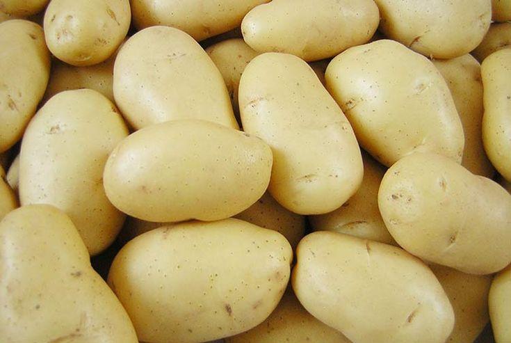 Как выращивать картофель в засушливых районах и получать неизменно высокий урожай -