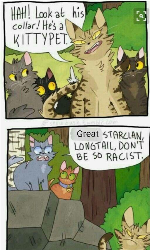Warrior cats meme