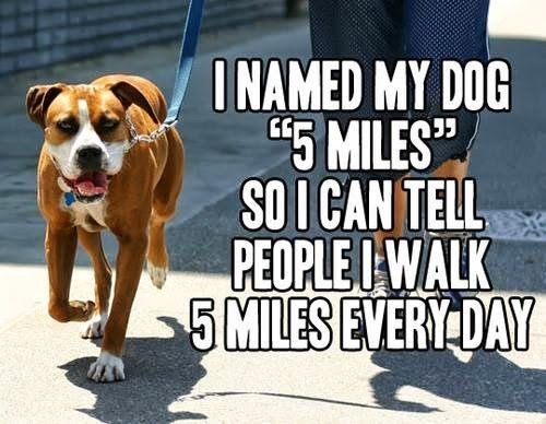 Funny Dog Owner   I named my dog 5 Miles so I can tell people I walk 5 Miles every day!   From Funny Technology - Google+ via I Wastes So Much Time