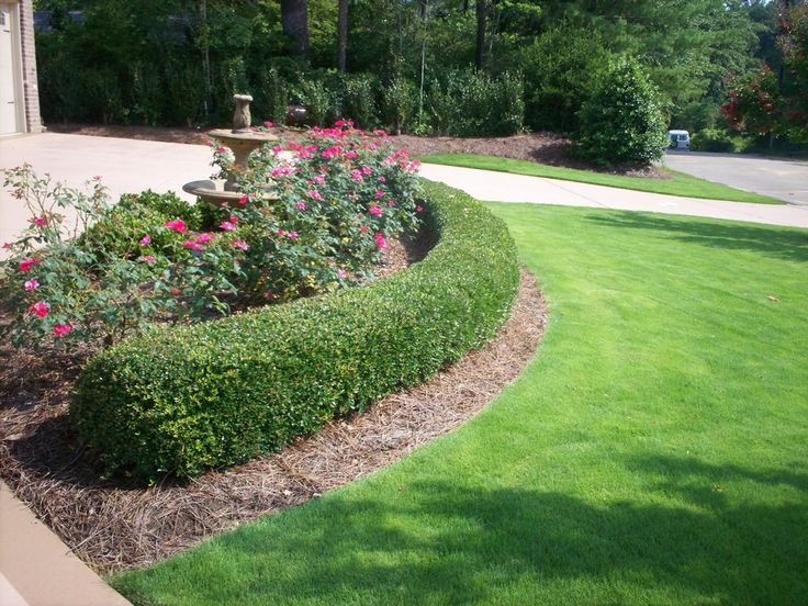Knockout Rose Bush And Hedge Garden Google Search