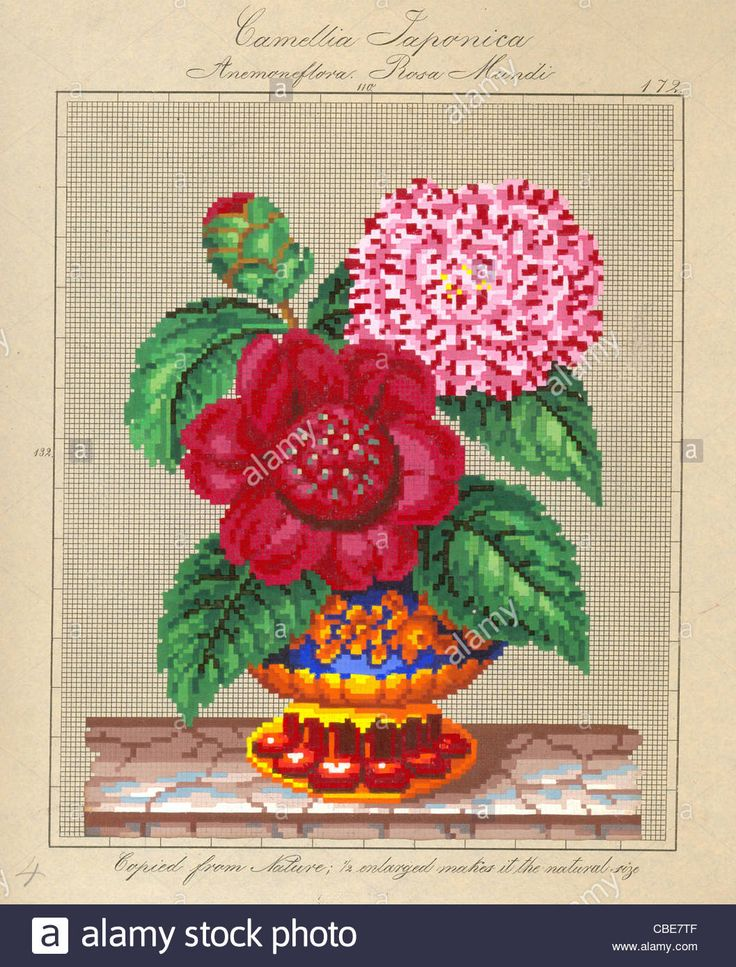 Download this stock image: Berlin wool work pattern for Camellia Japonica and Rosa Mundi - CBE7TF from Alamy's library of millions of high resolution stock photos, illustrations and vectors.