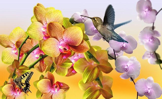 Flores hermosas funerarias