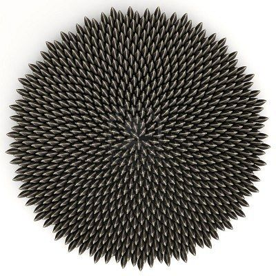 Sunflower seeds arranged according to golden angle by computer aided placement - accurate to 10 digits. There are 800 of them.