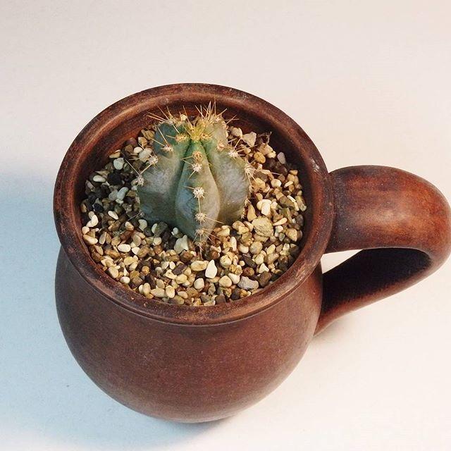 😍😍😍 #кактусы #суккуленты #хобби #растения #цветы #succulents #kaktus #pots #hobby #plants #flowers