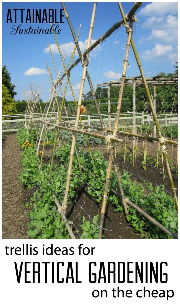 17 Best Images About :: Vegetable Gardens & Growing Food