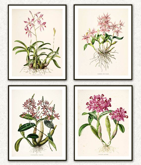 Orchid Botanical Prints Flowers Antique by PrintGallerySets